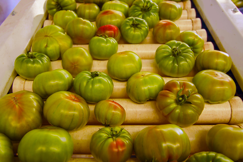Food Farm 4.0 e ITS T&F: far crescere i nuovi professionisti dell'agroalimentare